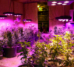 best-led-grow-lights-for-indoor-plants-review-300x300