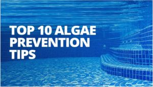 how to clean algae from bottom of pool